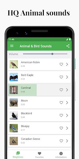 Bird and Animal soundboard screenshot 1