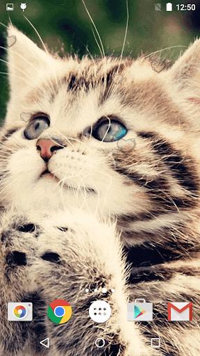 جذاب القطط خلفيات حية 5 تصوير الشاشة