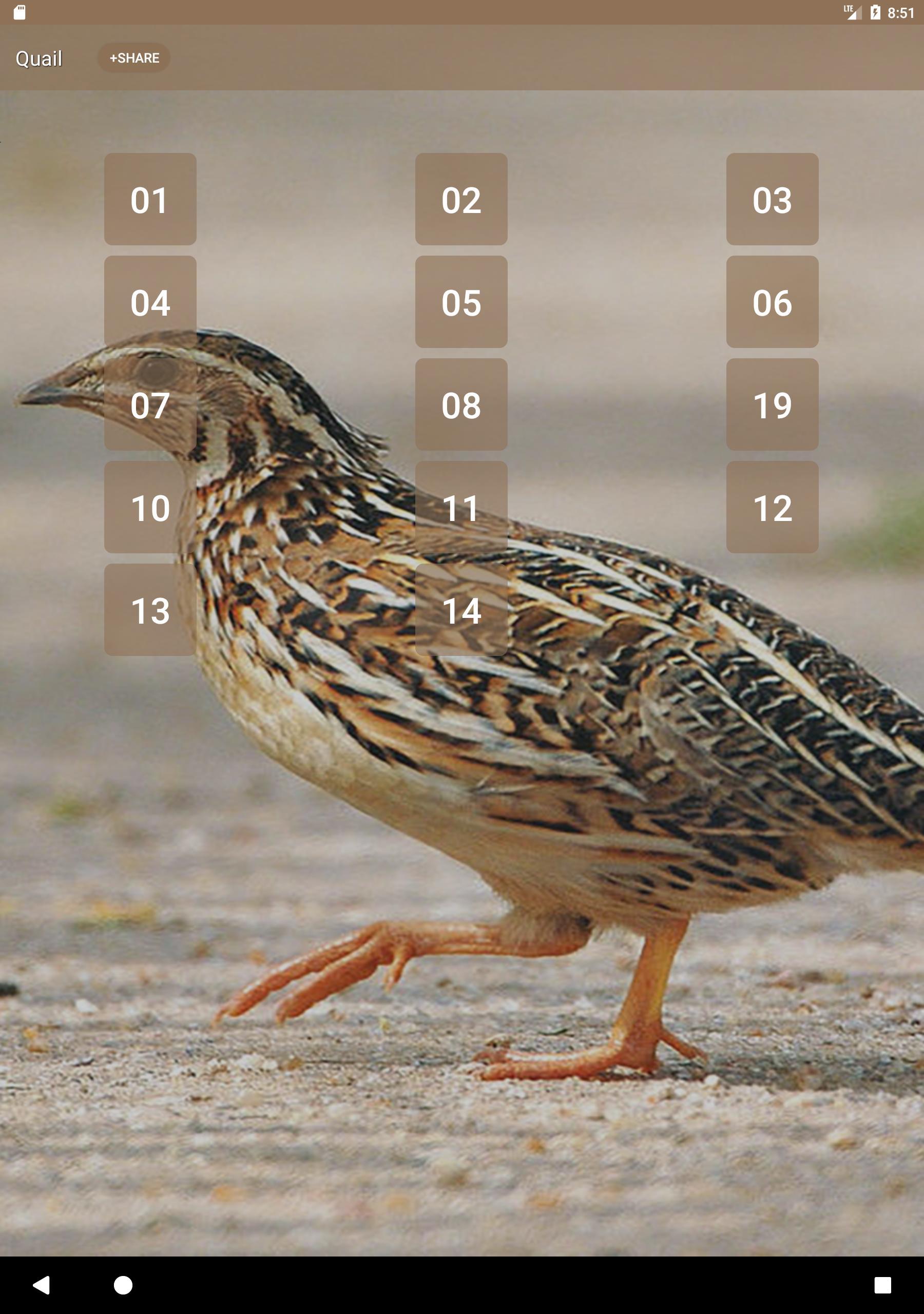 Quail Bird (Animal) Sounds screenshot 5