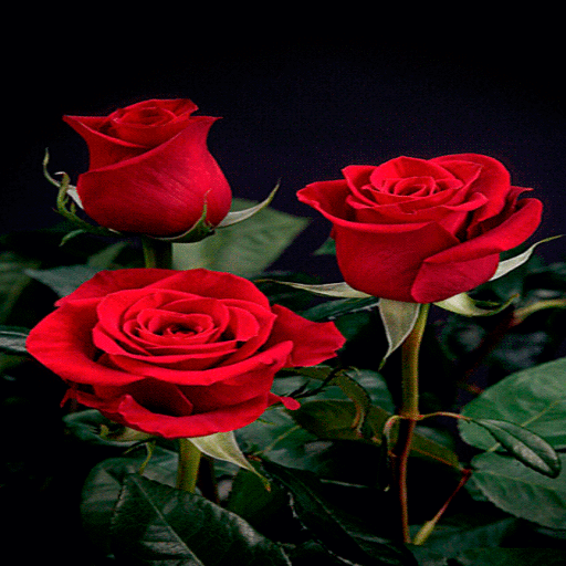 Beautiful Roses LWP icon