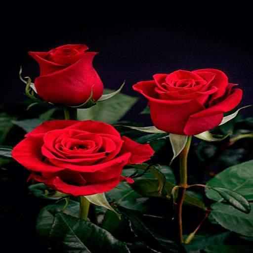 Beautiful Roses LWP