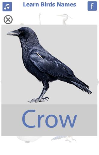 Birds name in English screenshot 4