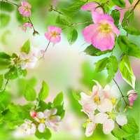 Hежный Цветы Живые Обои on 9Apps
