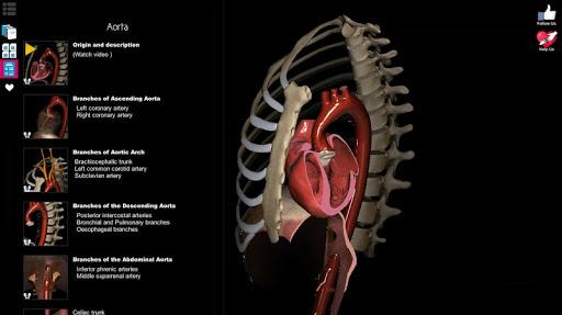 Anatomy Learning - 3D Anatomy Atlas screenshot 11