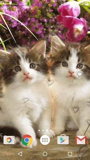 جذاب القطط خلفيات حية 10 تصوير الشاشة