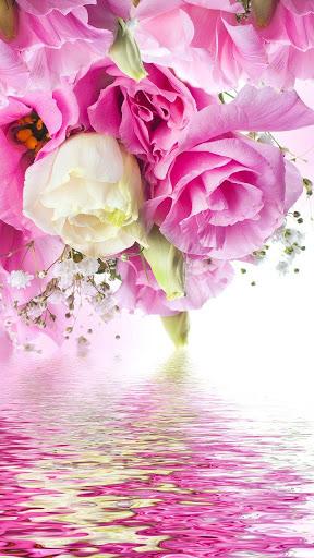 وردي  الوردة للجدران لايف 4 تصوير الشاشة