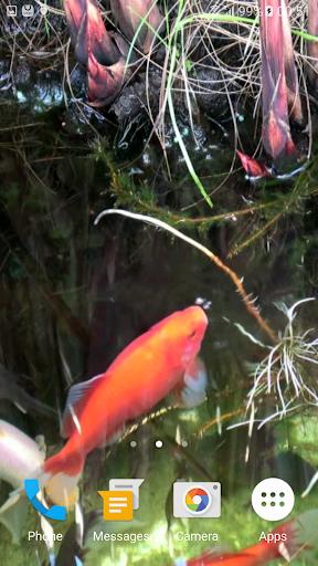 Koi Video Live Wallpaper FREE 2 تصوير الشاشة