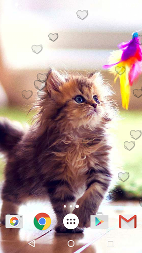 جذاب القطط خلفيات حية 4 تصوير الشاشة