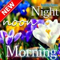 Good Morning Good Night beautiful flower wishes on APKTom