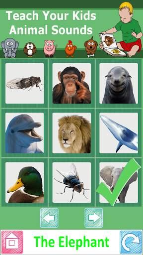 Teach Your Kids Animal Sounds screenshot 3