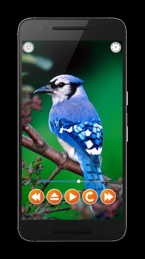 Birds Sounds Relax and Sleep screenshot 2