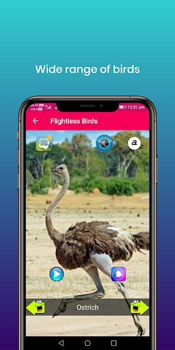 100 suara burung: nada dering, wallpaper screenshot 11