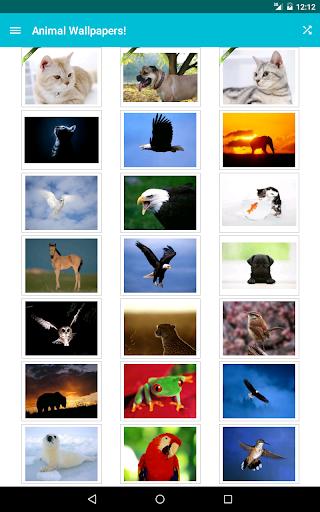 Animal Wallpapers! screenshot 5
