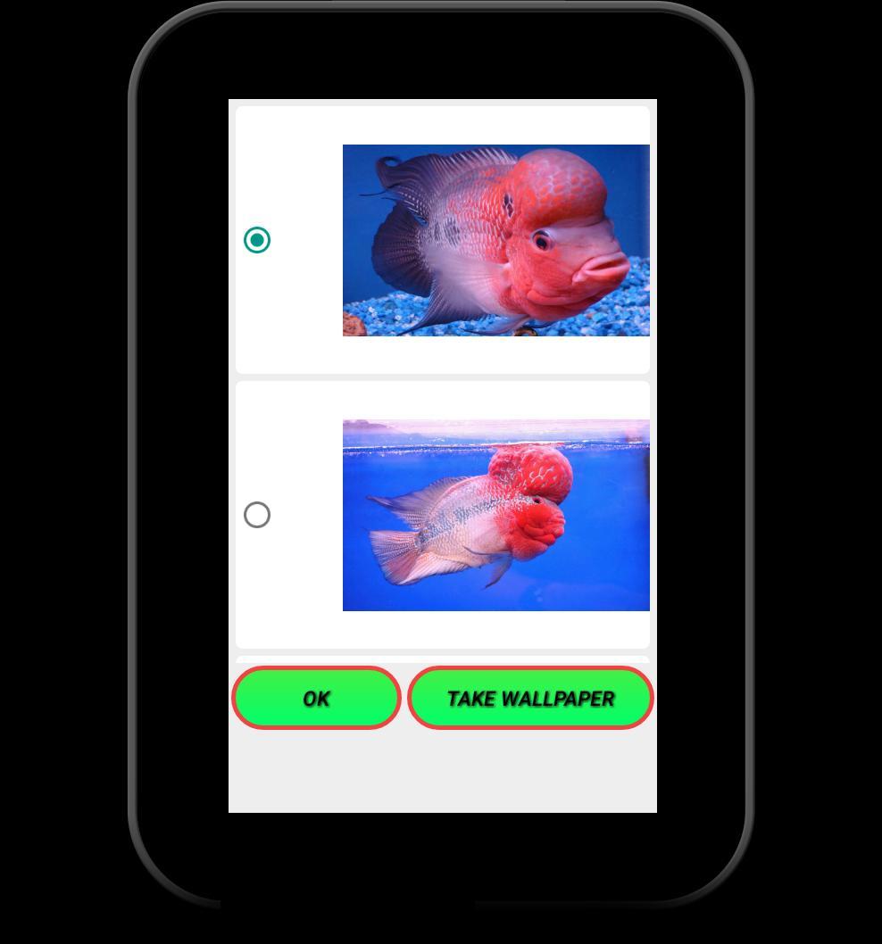 Flowerhorn Fish Special Live Wallpaper 11 تصوير الشاشة