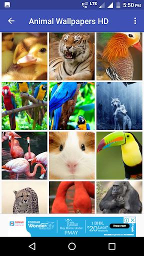 Animal Wallpapers HD 7 تصوير الشاشة