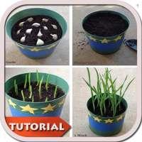 النباتات التي تنمو DIY - دروس on APKTom