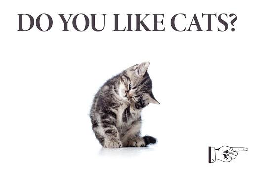 नोटपैड नोट्स : Cat Sticky - बिल्ली screenshot 3