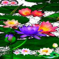 Multicolor Lotus LWP on 9Apps