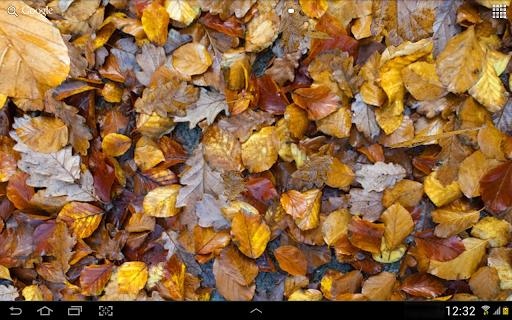 Autumn leaves 3D LWP screenshot 10