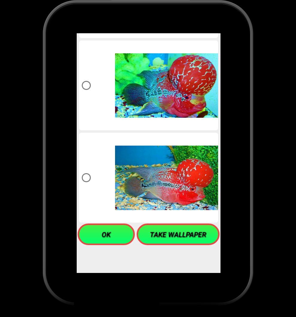 Flowerhorn Fish Special Live Wallpaper 12 تصوير الشاشة