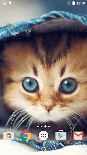 جذاب القطط خلفيات حية 6 تصوير الشاشة