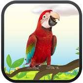 Real Talking Parrot on APKTom