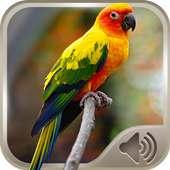 الطيور صوتية on APKTom