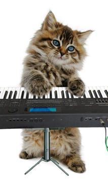 القطط مضحك. الرقص واللعب 5 تصوير الشاشة