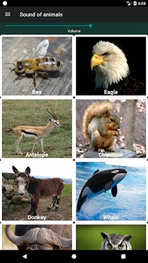 أصوات الحيوانات 10 تصوير الشاشة