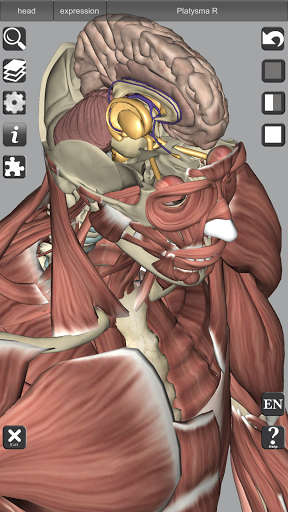 3D Bones and Organs (Anatomy) 5 تصوير الشاشة