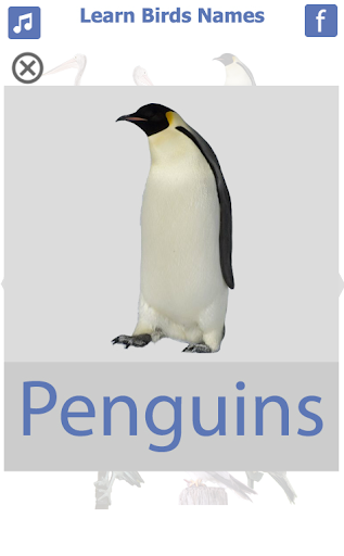 Birds name in English screenshot 8