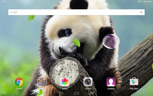 Cute Panda Live Wallpaper screenshot 9