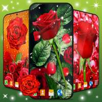3D Red Rose Live Wallpaper 🌹 Spring Garden Themes on 9Apps