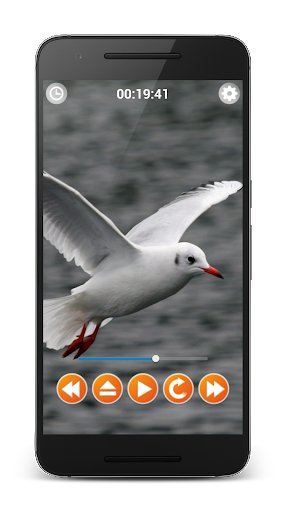 Birds Sounds Relax and Sleep screenshot 5