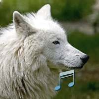 Animal and Bird Sounds on 9Apps