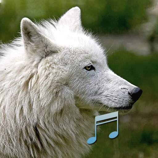 Animal and Bird Sounds