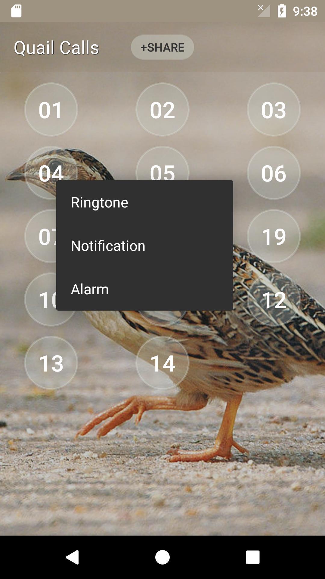 Quail Bird (Animal) Sounds screenshot 3