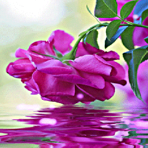 Purple Rose Swining LWP icon