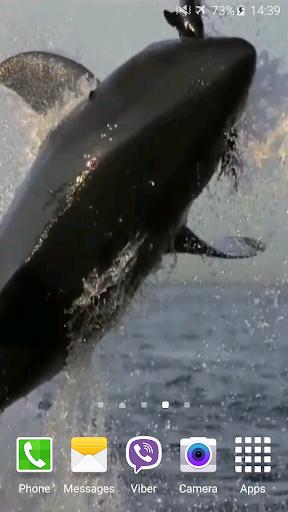 Shark Attack Live Wallpaper 6 تصوير الشاشة