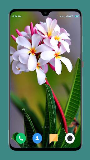 Flowers Wallpaper 4K screenshot 7