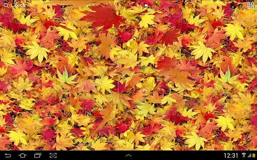 Autumn leaves 3D LWP screenshot 9