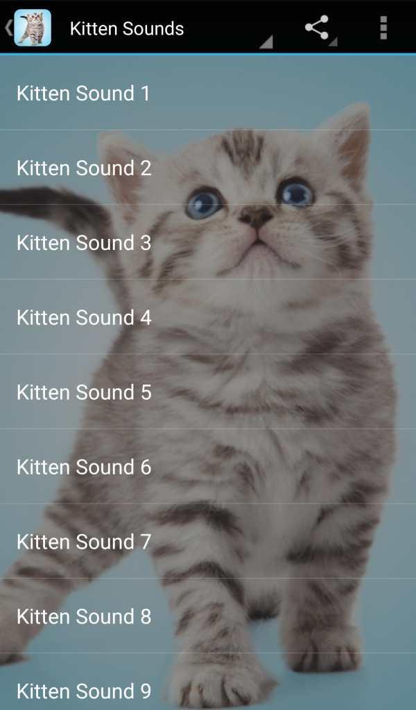 Kitten Sounds screenshot 1