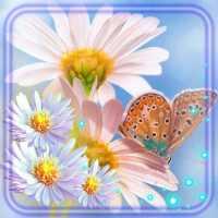Ромашки Цветы Живые Обои on 9Apps