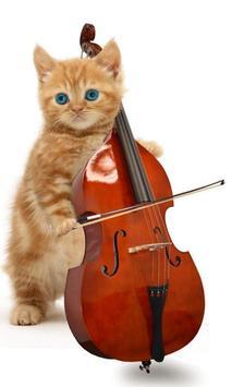 القطط مضحك. الرقص واللعب 1 تصوير الشاشة