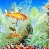 حوض السمك خلفيات حية on 9Apps