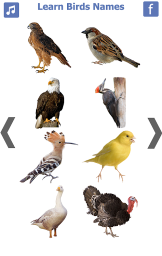 Birds name in English screenshot 5