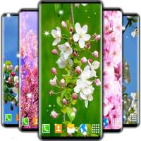Cherry Blossom Live Wallpaper 🌸 Spring Wallpaper icon