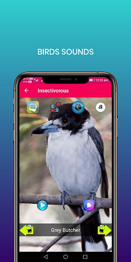 100 suara burung: nada dering, wallpaper screenshot 13