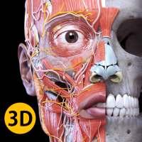 Anatomy 3D Atlas أيقونة