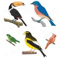 A to Z Birds Name on APKTom